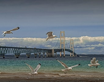 Flock of Gulls Flying by the Bridge in the Straits of Mackinac between Lake Michigan and Lake Huron No.2126 A Bird Seascape Photograph