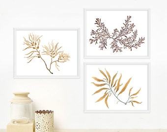 Seaweed Botanical Print Set - Any THREE Watercolor Art Prints / 8x10 OR 8x11 Minimal Wall Art, Home Decor