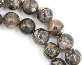 Turritella Agate Beads - 8mm Round