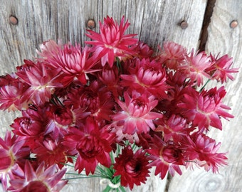 Dried Flowers Straw flowers Bouquets Pink Stem Shades of Pinks 50 Wired by Hand Floral Supply Florists Strawflowers Crafts from our garden
