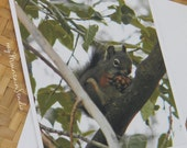 Squirrel with Pinecone Photo Note Card - Wildlife Nature Photography Montana