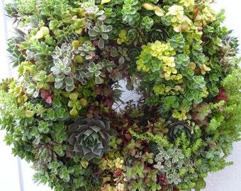 Living Wreath  Patio Wreath Centerpiece    Wedding Wreath   Natural Wreath   Succulent Wreath  Patio Wreath  Birthday Gift