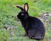 Animal Photography Black Bunny Photograph Greeting Card Pet Portrait