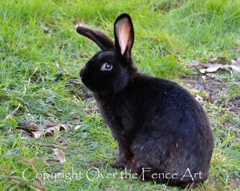 Easter CARD, Animal Photography Black Bunny Rabbit Photograph Greeting Card Pet Portrait
