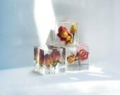 SOLD Reserve for Reuben Parkin- 2 Dried Rose resin Cubes