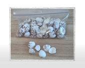 "Spotted Clam Sea Shells 5-6 oz baggie (Sm sz .75""- 1"")  -- Natural Seashells, Craft Shells, Beach, Nautical, Coastal Shells, Craft Supplies"