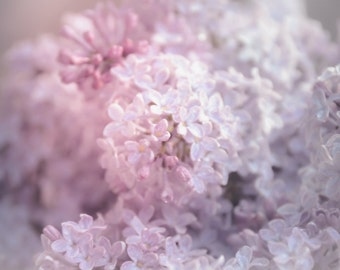 Floral Photography Lilacs,pink,print for baby girl's room,lavender,baby nursery art,springtime,shabby chic,soft dreamy artwork,delicate
