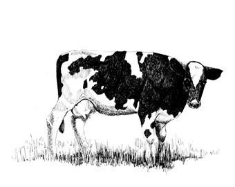 Cow art, cow print,bovine art,Pen and Ink cow. black and white cow.farm animal art, bovine print, ink cow art, animal prints,