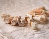 9 spiral seashell innards (no.65)