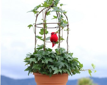 Live English Ivy Birdcage - 19""