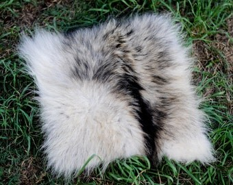 Alaskan Wolf Pelt Tanned Square Section