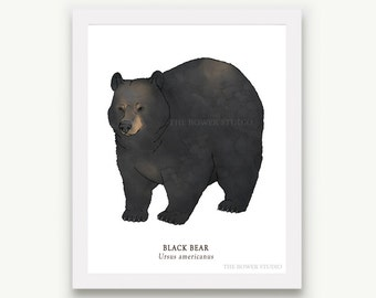 Black Bear Print - Unmatted