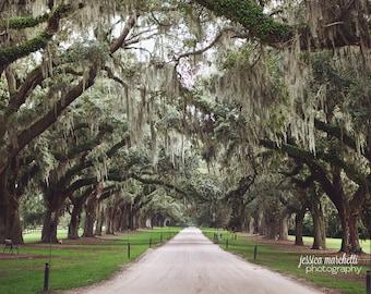 Tree Print, Tree Photography, Boone Hall Plantation, Avenue of Oaks, Charleston Art Fine Art Photography, Oak tree, spanish moss
