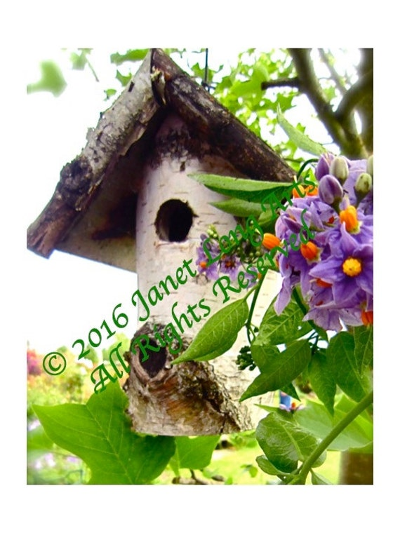 DIGITAL DOWNLOAD Nature Photography Birdhouse rustic neutral colors Lavender Red Green Spring Summer Autumn wall art home office decor