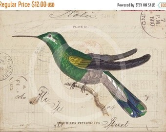 ON SALE Vintage Hummingbird Collage Print  - Home Decor - Trochilus Petasphorus 1