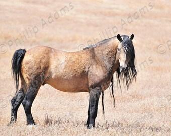 """Mesteño 20 - Mustang Stallion - 8.5"""" x 11"""""""
