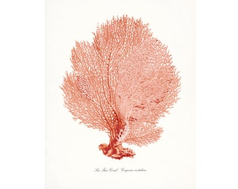 Coastal Décor Vintage Sea Coral Giclee Print – Sun-kissed Coral Sea Fan