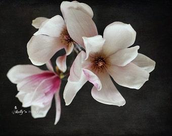 Flower Photography- Magnolia Photograph, Floral Still Life, White Pink Black, Dark Floral Art, Magnolia Flowers Still Life, Black Wall Art