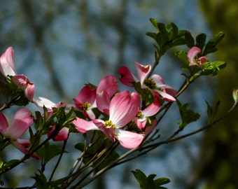 Flowering Trees, Macro Photography, Floral Photography, Nature Photography, Photo by Abby Smith, Home Decor, Floral Decor, Infinite Graphics