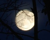 Moon of Shaken Leaves, November Full Moon, moonphase square photograph, white moon through tree branches