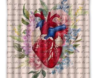 Anatomy Heart Shower Curtain - Anatomy Heart Shower Curtain - Heart Anatomy Print - Anatomy Heart, Home Decor