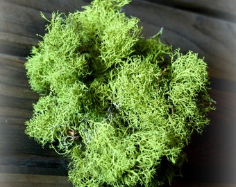 1 oz spring/lime green Reindeer moss/ Chartreuse lichen for crafts