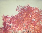 Red Tree Photography, Orange Fall Photograph, Gray Autumn Picture, Modern Nature Decor