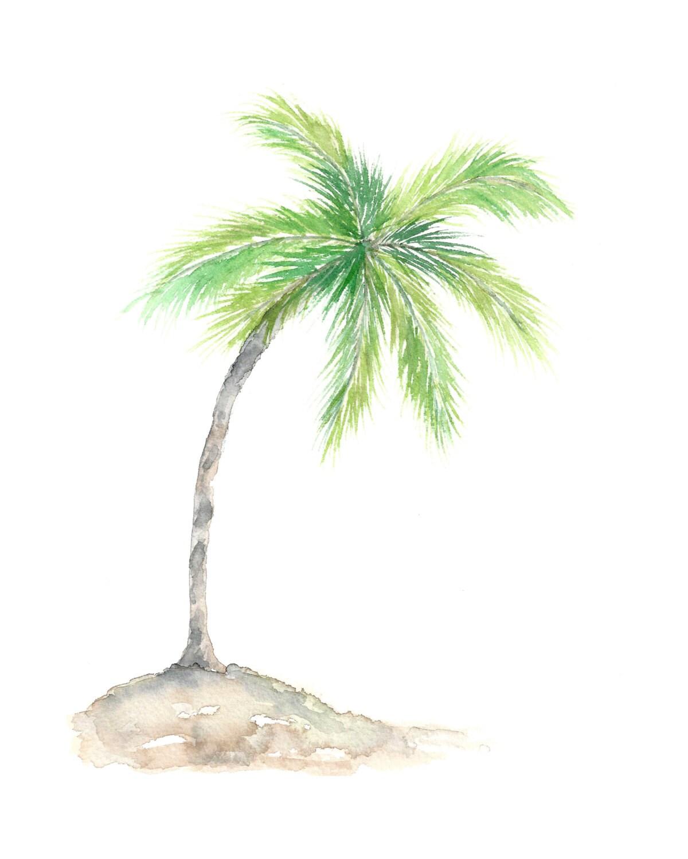 palm tree watercolor - photo #8