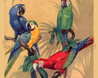 Vintage Retro Tropical MACAW Parrot Bird Avian Aviary BLUE Red Green Poster Fine Art Print