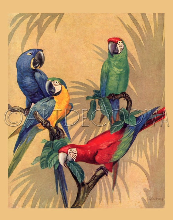 Vintage Tropical MACAW Parrot Bird BLUE Red Green Art Poster Print