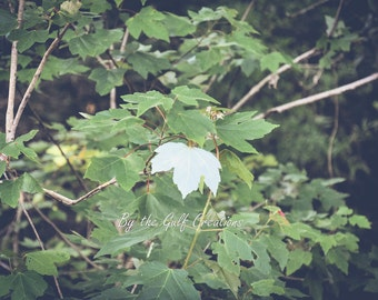 Maple Leaf, Nature Photography, 8X10, Mat, Forest, Trees, Glossy, Fine Art Print