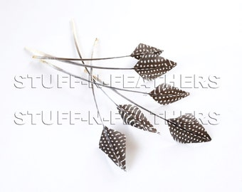 Stripped Guinea wing feathers arrowhead shape, black / brown spotted feathers / loose feathers / 6-8 in (15-20 cm) long, 6 pieces / F174A