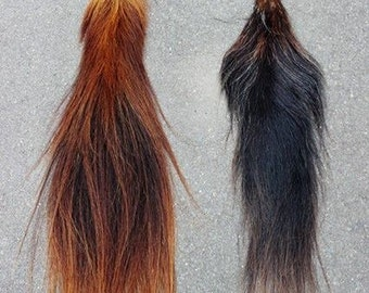 Bay Horse Tail