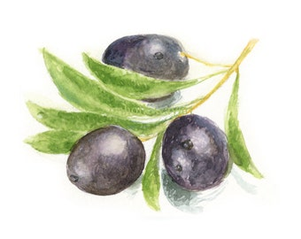 Watercolor Olives, Olives Print, Ripe Olives Print