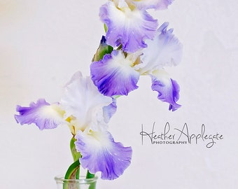 Gallery Wrap Canvas - Purple Bearded Iris - Choose a size