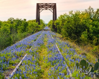 Wildflowers, Landscape photography, Bridge to Texas, Texas, Hill Country, railroad,Western, flowers, bluebonnets, fine art print