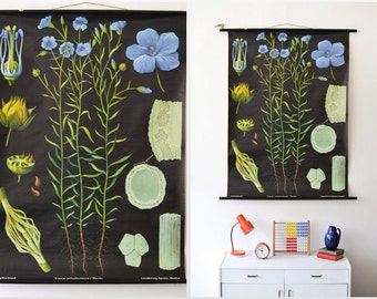 Black botanical print, floral pull down chart, black poster Jung Koch Quentell, educational chart Ref: 283