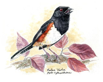 "Rufous-Sided (Eastern) Towhee- 5""x7"" Print of Original Ink Watercolor Painting"