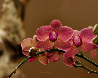 Pink Yellow Orchid, Flower photography, Nature, Metallic Paper, Vivid Metal, Metal Print, 5x7, 8x12, 16x24, 24x36