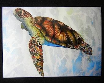 Mr  Turtle 5x7 inch  print By Valerie Flynn