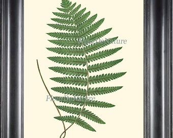 Beautiful Green Fern Print Botanical Art 9 Antique Ferns Illustration Picture Drawing Forest Summer Plant Nature to Frame Home Wall Decor