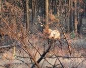Roosevelt Bull Elk, In The Forest, DIGITAL DOWNLOAD, elk decor, wildlife decor, fine art photography