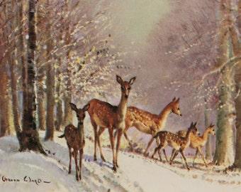 Vintage Vernon Ward Deer Print Christmas Card