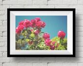 Celebration, Sunlight, Fine Art Print, Nature Photography,  Wall Art, Flower, Wall Deco, Home Deco, Floral, Rose