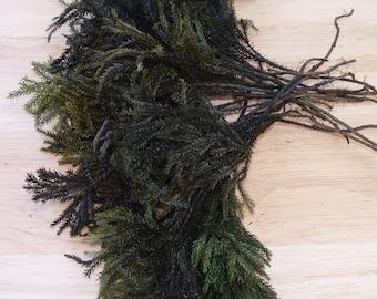 PRESERVED PRINCESS PINE Bunch, One Pound, 75 Stems, Christmas Decorations, Woodland Wedding, Rustic Decor, Craft Supplies
