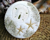 Sand dollar and starfish absorbent beach coasters..  Ocean accents for your home. Set of 4. Made in USA