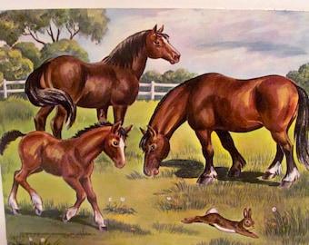 Vintage Horses  Poster
