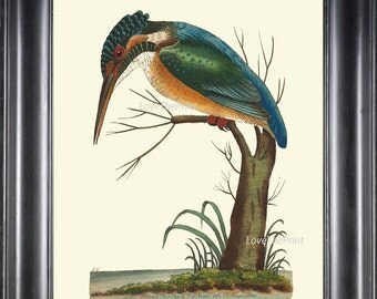 Bird Print  Art NOD167 Beautiful Antique Blue Woodpecker Colored Illustration Decoration Wall Hanging Home Room Decor Forest Nature