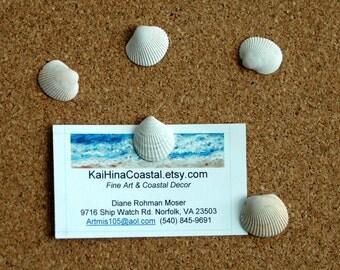 Seashell Thumbtacks Pushpins Coastal Office Decor