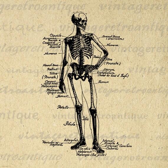 Human Skeleton Diagram Digital Printable by ...